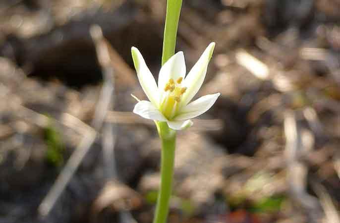 Mandala-blomma-686
