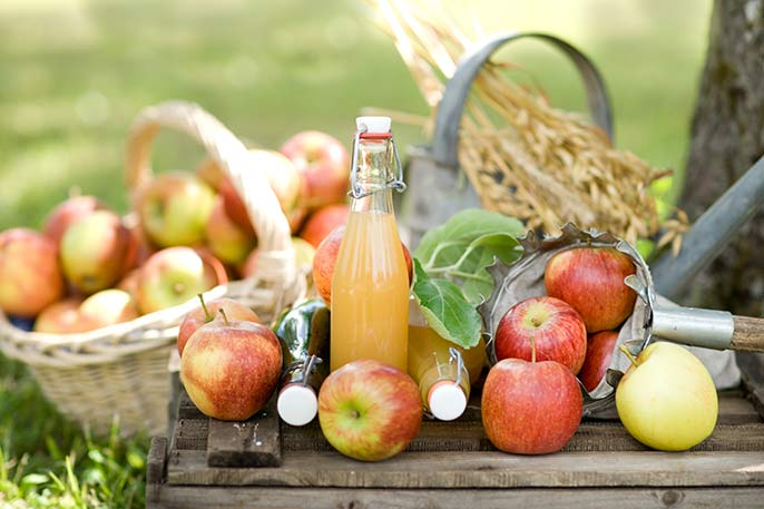 Cider-apple-harvest-686