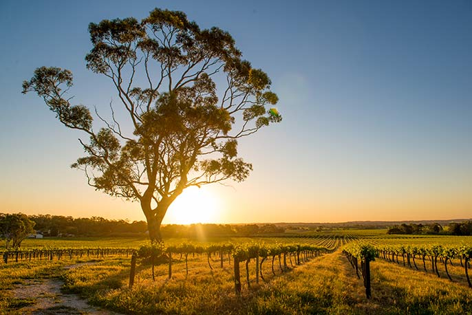 Jacobs-Creek-Barossa-686