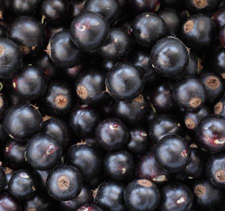 Kan ett vin smaka svarta vinbär?