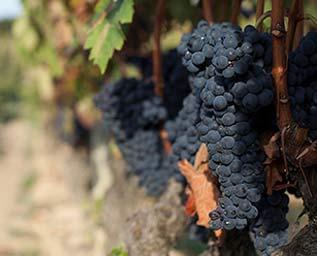 Elegans från spansk vinperiferi