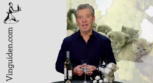 Kan ett vin lukta kattkiss?