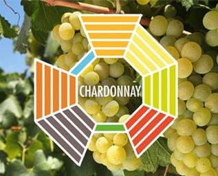 Druvskola Chardonnay