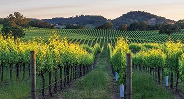 Besök en vingård i sommar
