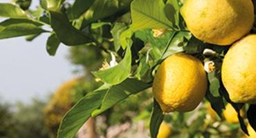 Kan ett vin smaka citron