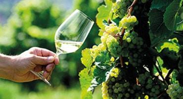 Viner på Verdejo vinner erkännande