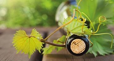 Grön vingastronomi sommarens bästa kombo