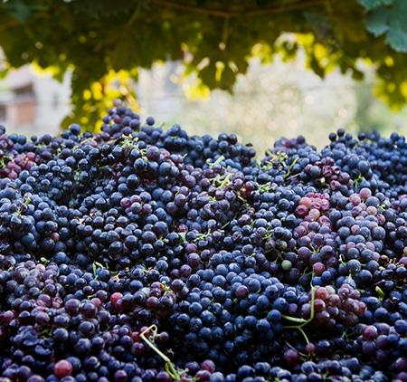 Vin på russin