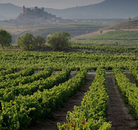 Vitt vin i Rioja?