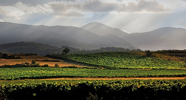 Webb-TV: Vitt vin i Rioja?