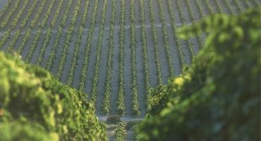 Mytomspunnet vin ger Jerez kultstatus