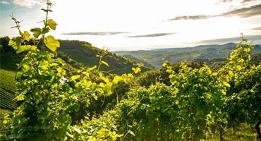 10 röda toppviner från Italien
