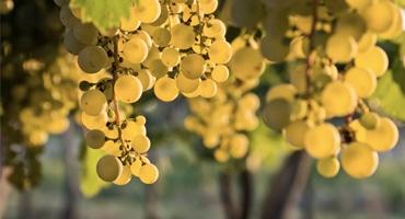 Bästa 10 viner på Chardonnay