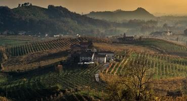 Sju riktigt bra vita viner från Italien