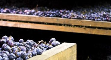 Vin för nybörjare