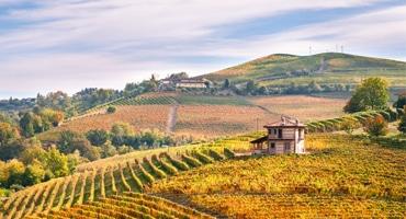 Fem spännande vita viner från Piemonte