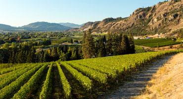 Kanadas viner vinner på elegans