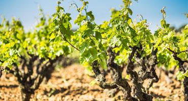 Toppvineri lanserar viner från Spaniens tre bäst..