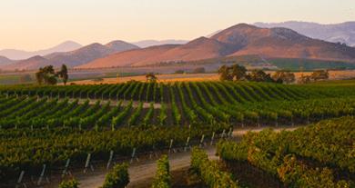 Hurra – därför blir vin billigare i flera år