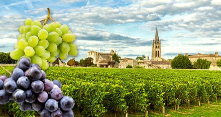 Nya druvor i Bordeaux – är det ens möjligt?
