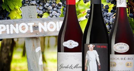 3 vintips om älskade Pinot Noir